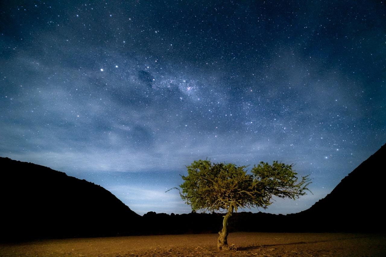 Voie lactée dans le ciel avec un arbre au premier plan